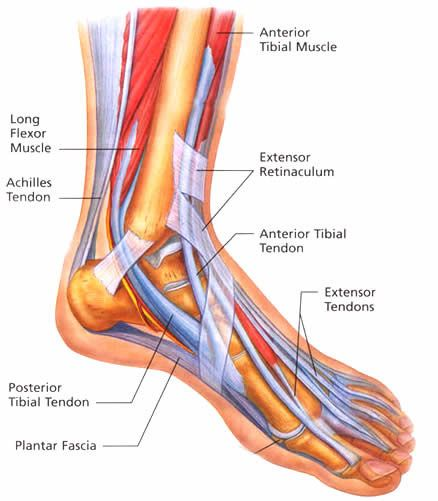 Foot Pain Foot Pain Treatment Foot Pain In Arch Elite Spine Centres